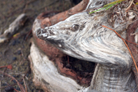 Quelques détails découverts et photographiés dans les écorces des arbres et publiés parfois avec quelques aménagements artistiques réalisés par François-Régis Hoareau