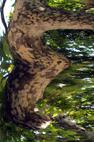 Photographies sur facéties des arbres en numérique par François-Régis Hoareau photographe artiste infographiste et digigraphique