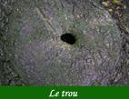 Photographie sur facéties des arbres en numérique par François-Régis Hoareau photographe artiste infographiste et et digigraphique