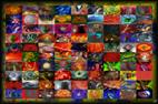 Compositions décoratives pour création de tableaux à partir d`une même image en teintes différentes par François-Régis Hoareau photographe artiste infographiste digigraphe