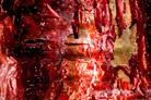 Photographie de la nature ordonnée pour réalisations de tableaux décoratifs `design` et harmonieux par François-Régis Hoareau photographe artiste infographiste digigraphe