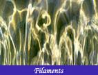 Photographies au fil de l`eau avec ses reflets et ses couleurs de surface - Photos par François-Régis Hoareau photographe artiste infographiste et digigraphe