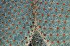 Flore colorée en images numériques et digitales, graphismes et infographie par François-Régis Hoareau photographe infographiste designer