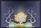 Photographie numérique sur des fleurs pour des séries dédiées à des compositions murales et stores `design` harmonieux par François-Régis Hoareau photographe artiste infographiste digigraphe